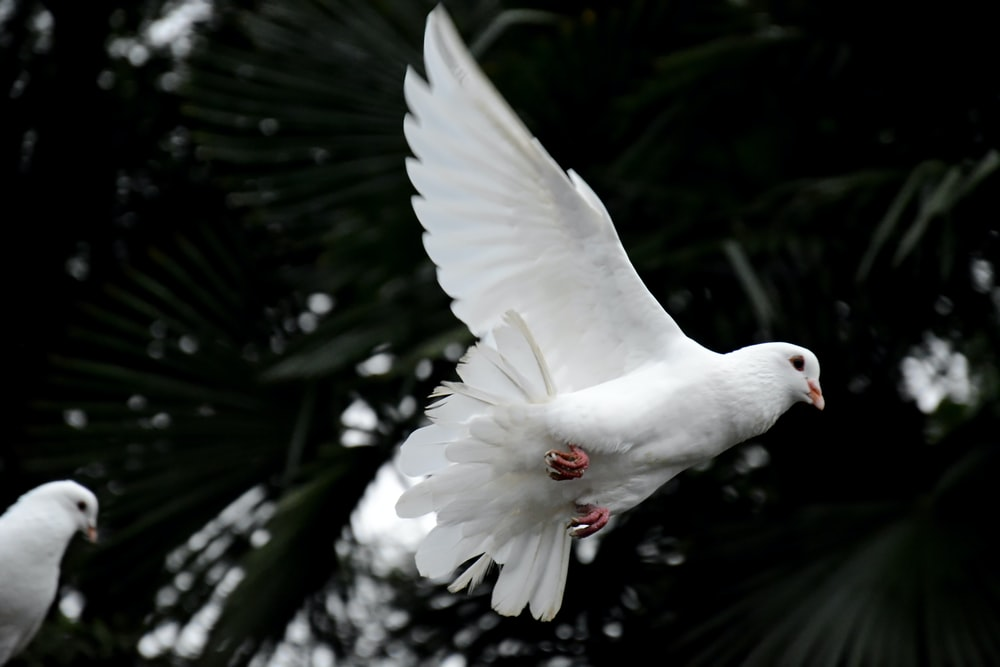 Holy spirit bible verses for divine leading