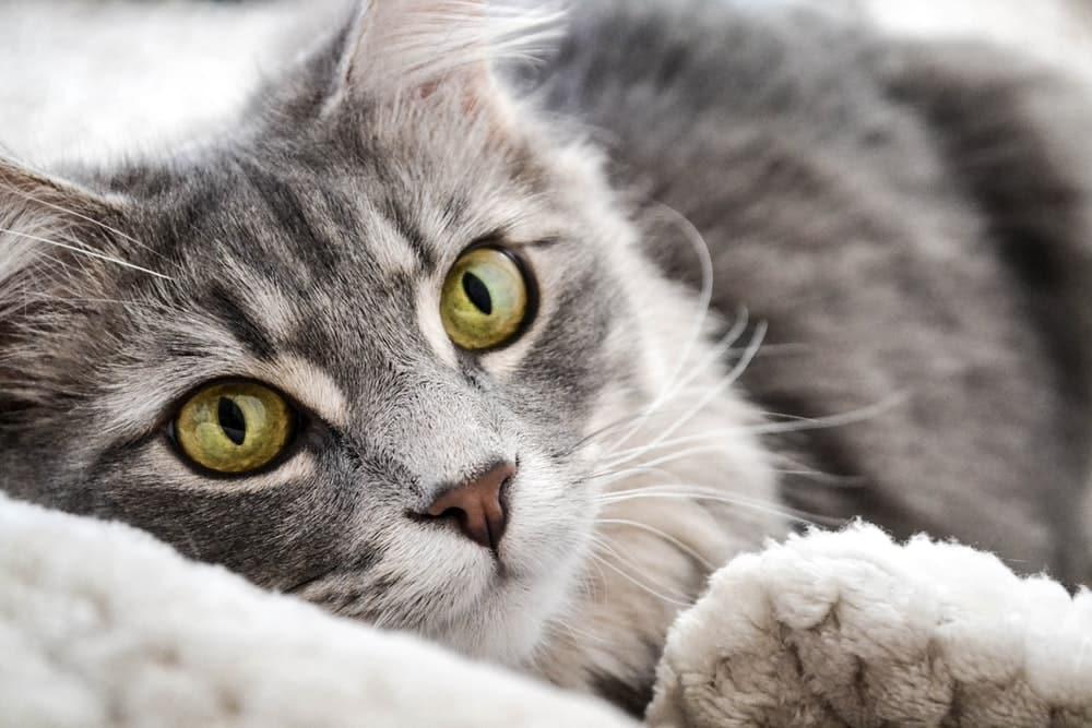 Prayers to heal a Sick CAT